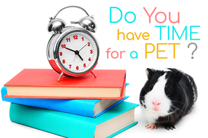 do you have time for a pet