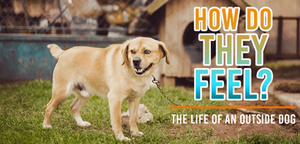 Is it okay to keep your dog outside