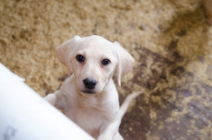 What You Need to Know About Puppy Mills and How You Can Help!