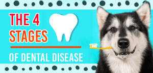 What are the 4 stags of dental disease for dogs?