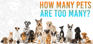 How many pets are too many?