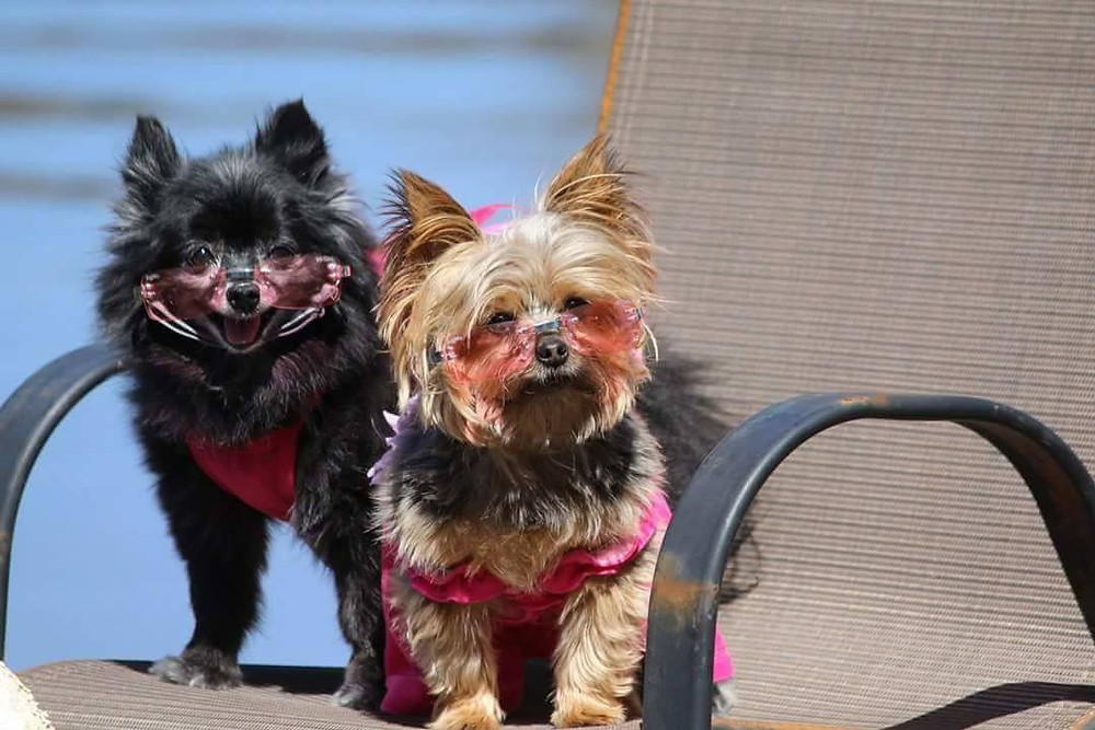 Maddie Belle (left) spent 12 years as a breeding dog in a puppy mill.