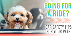Car safety tips for pets