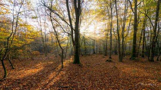 Forêt de la Hunaudaye