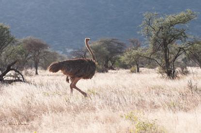 Kenya - Samburu national park