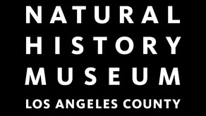 New position at NHMLA