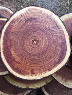 פרוסות עץ צבועות