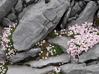 Ireland Flowers.jpg