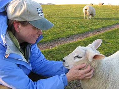 Iona Sheep 350px.jpg