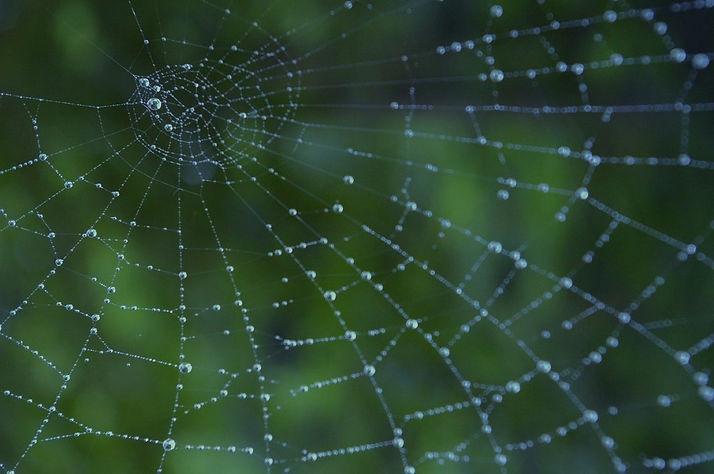 Spider%2520web%2520CC_edited_edited.jpg