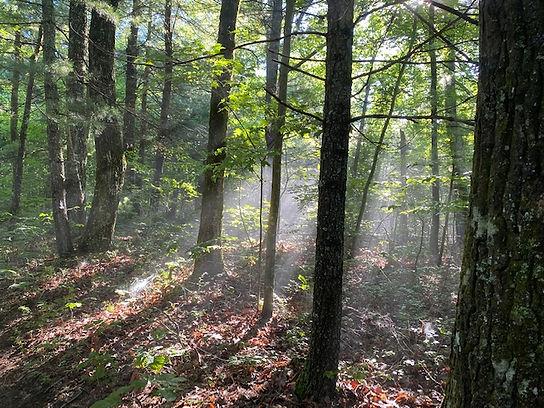 Sunlight in Forest Photo.jpg