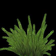 grass-transparent-png-1.png