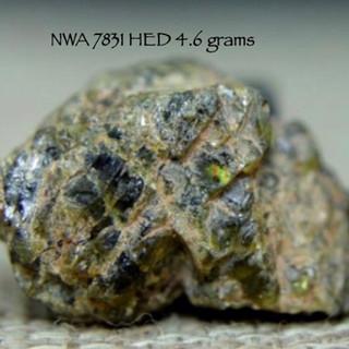 NWA 7831 HED 4.6 grams