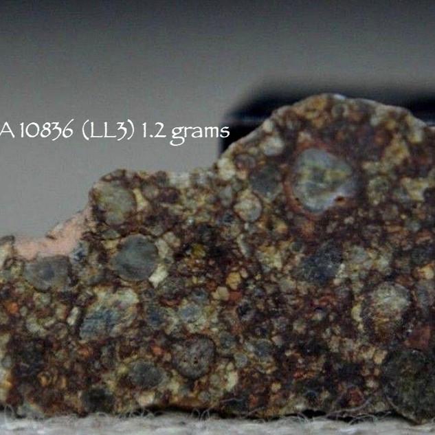 NWA 10836 (LL3) 1.2 grams