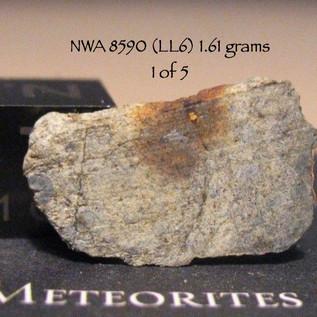NWA 8590 (LL6) 1.61 grams