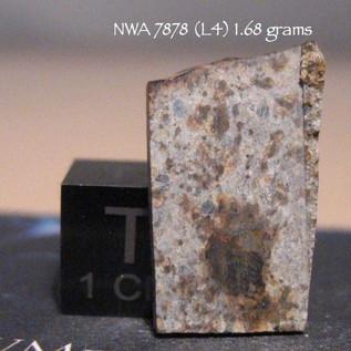 NWA 7878 (L4) 1.68 grams