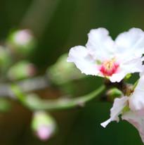 çiçek
