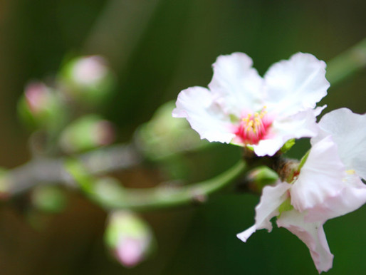 【BLOG】花の便り
