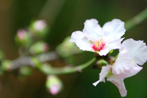 Blossoms close up