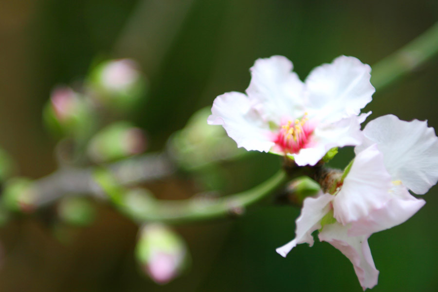 SundayHouse-Blossom