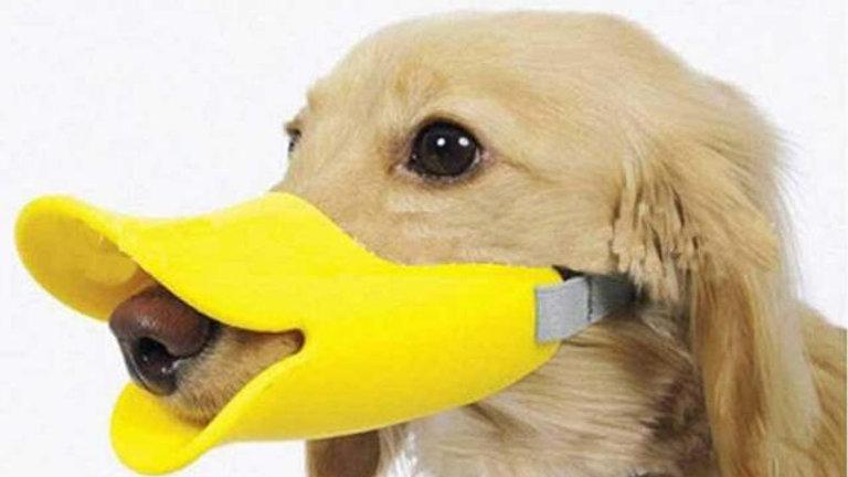Focinheira Cães modelo Bico de Pato tamanho M - Puppets
