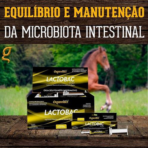 Suplemento para Equinos Display Lactobac Equi 12 unidades - Organnact