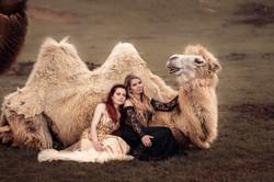 kamel1
