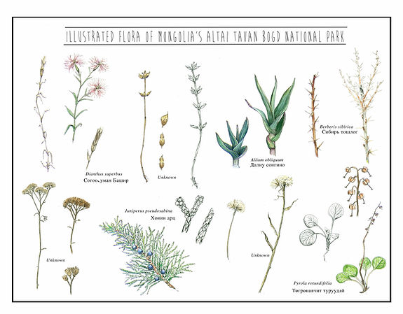 Bekka Ord Mongolia Flora small.jpg