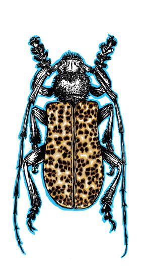 Electric Cheetah Beetle