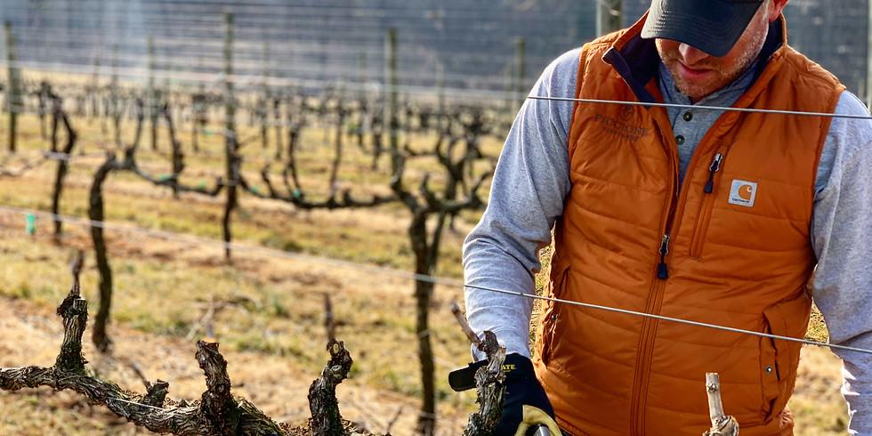 In the Vineyard Workshop: Pruning