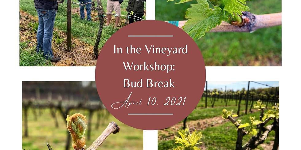 In the Vineyard Workshop: Bud Break