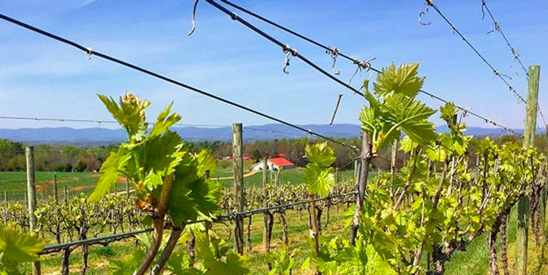 Check out the spring-vines photo album j