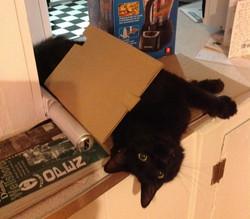 Debs Cat 1 (2)