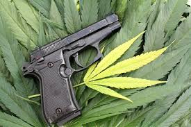 Marijuana and Firearms