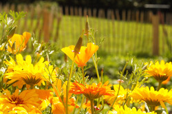 Billede til hjemmeside, blomst2