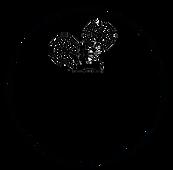 lifecapsule logo brand imge