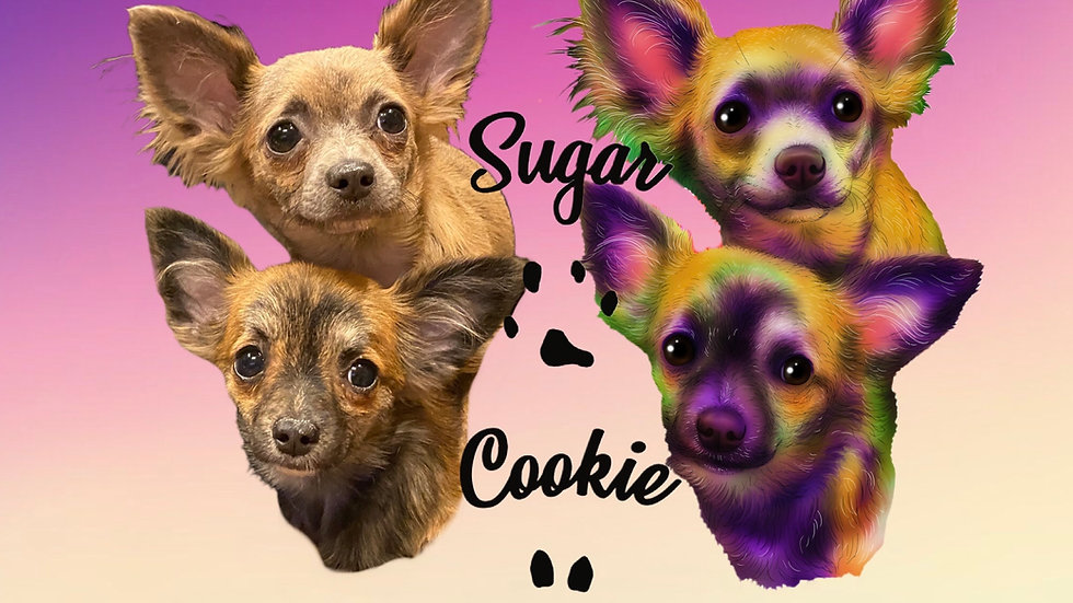 June 2020 - Sugar & Cookie