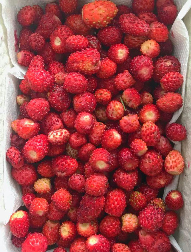 Wild Strawberries - What Does A Health Coach Eat in Klagenfurt, Austria - MSPETIT