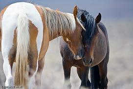 wild horses mark terrell watermark.png