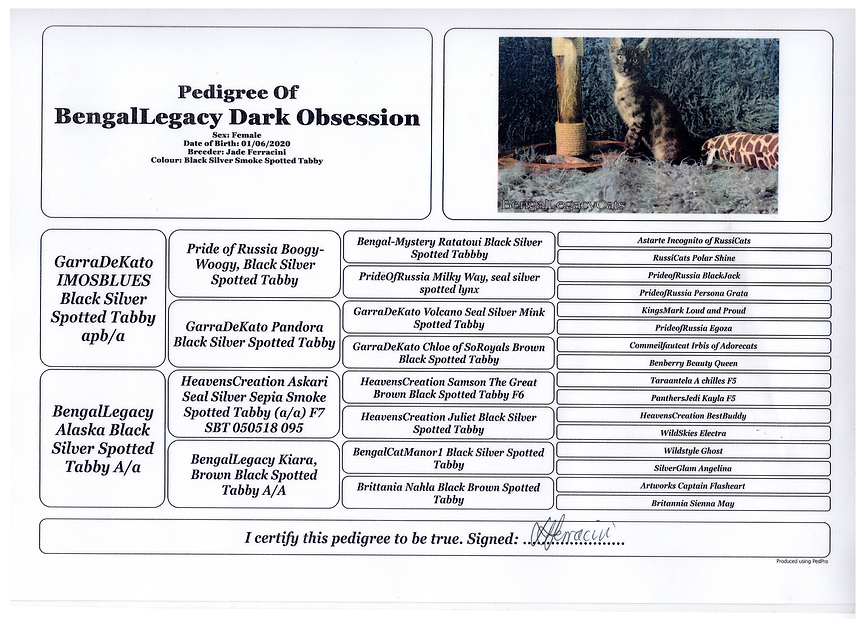 Obsessions pedigree for website.png