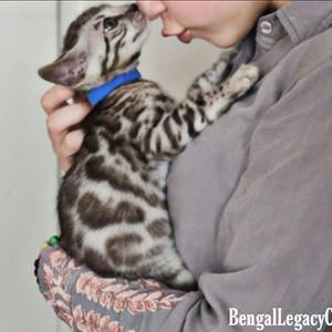 Silver Cub kisses time