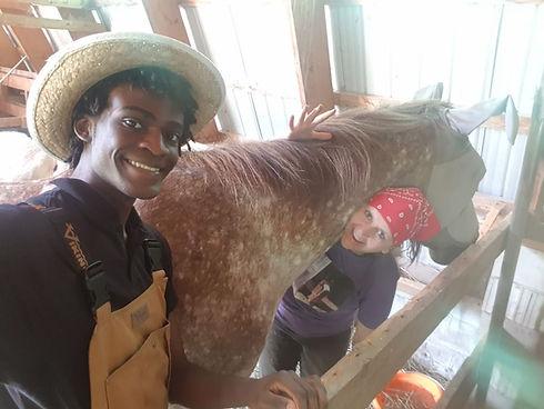 ###horses.jpg