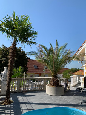 palmen am swimmingpool