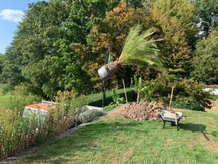 gärtner liefert palme