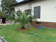 eingegrabene palme