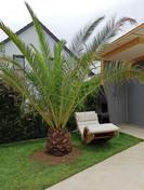 eine kleine winterharte palme