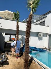 winterharte palmen im landkreis emmendingen kaufen