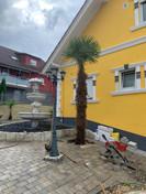 eine winterharte palme vor einem Haus
