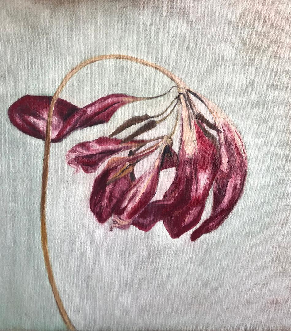 'Tulip Tears' Oil on Linen Board 40x40cm