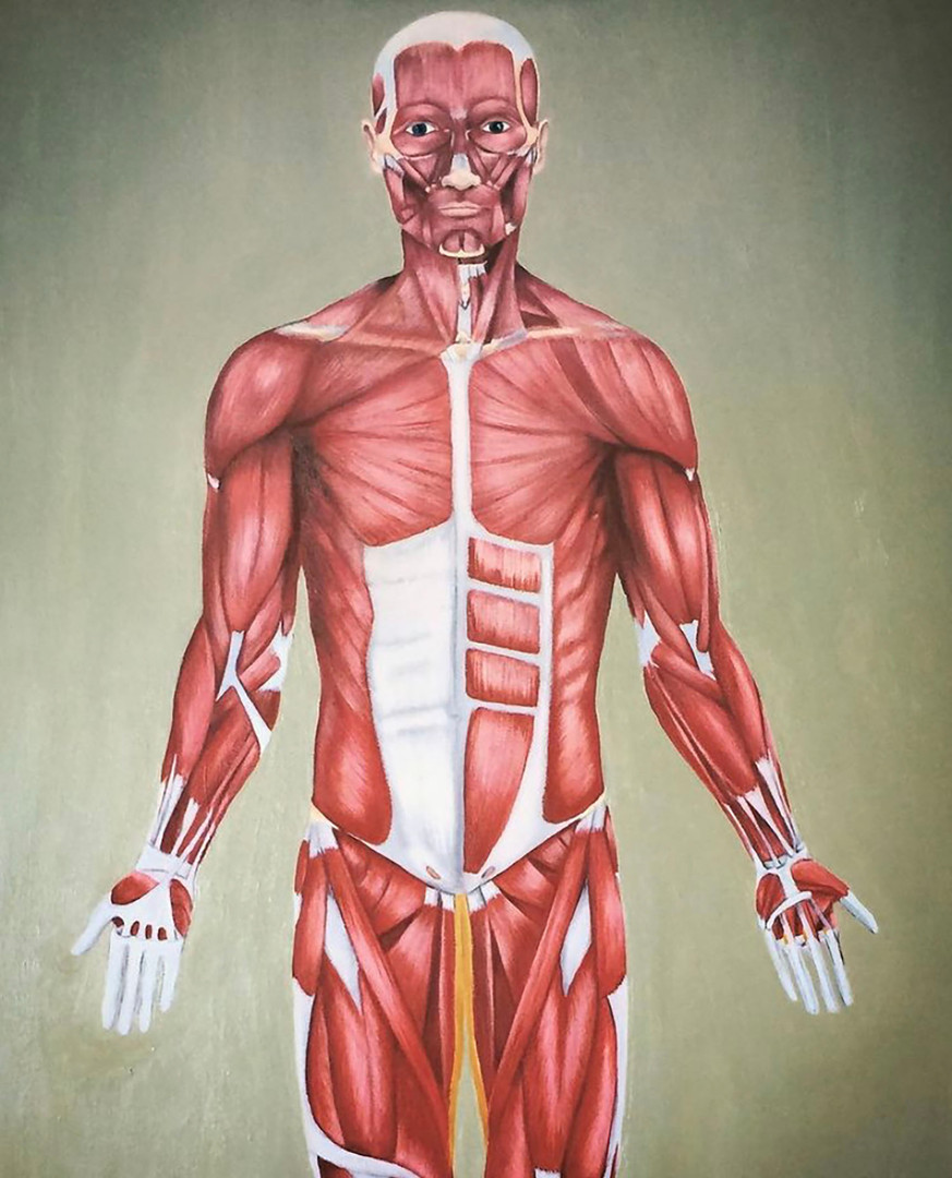 'Anatomical Man' Oil on Canvas Not For Sale